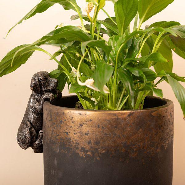 Jardinopia-Pot-Buddy-LABRADOR---INDOOR-POT