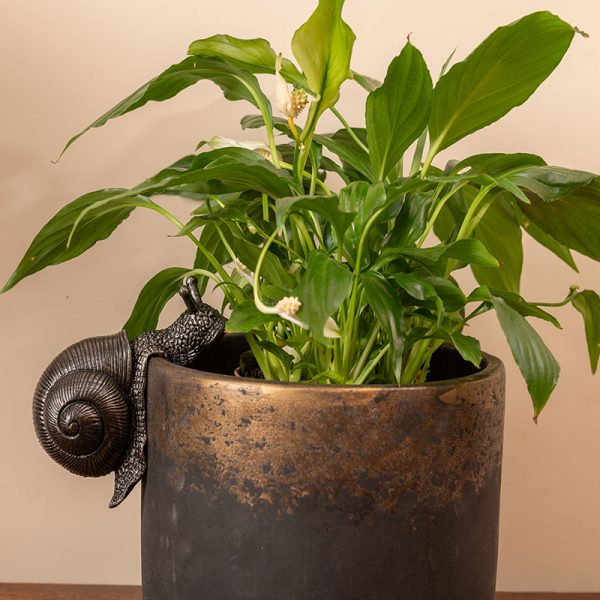 Jardinopia-Pot-Buddy-SNAIL---INDOOR-POT