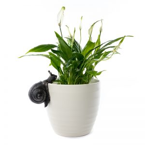Jardinopia-Pot-Buddy-Snail-ON-POT---PB0008