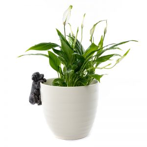 jardinopia-pot-buddy-LAB-ON-POT
