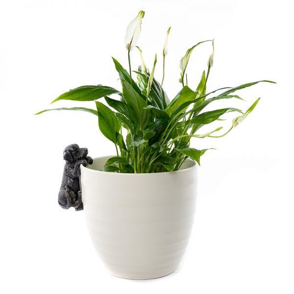 jardinopia-pot-buddy-LAB-ON-POT